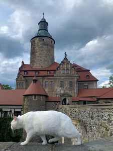 Zwiedzanie Zamek Czocha